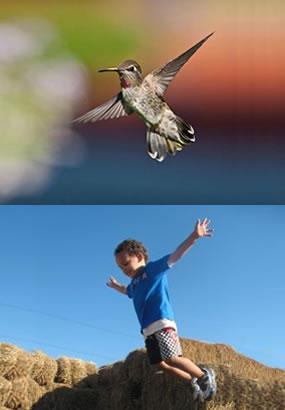 hummingbird-boy